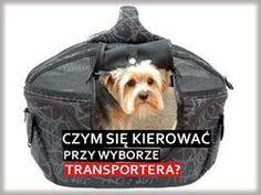 jak wybrać transporter dla psa?