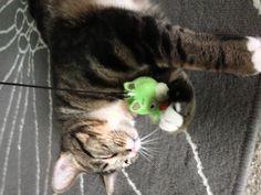 Toy heaven. #AngryBirds #cat