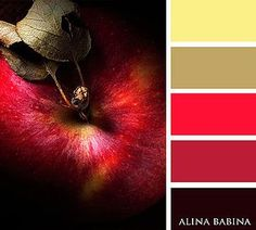 Alina Babina | Алина Бабина | FOOD