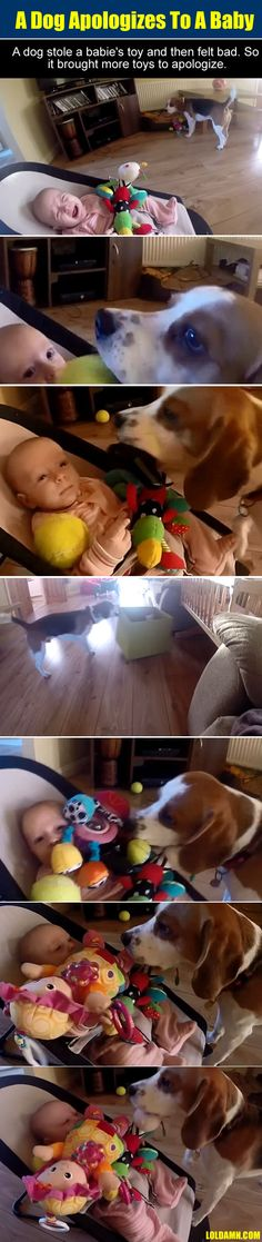 So A Dog Apologizes To A Crying Baby With Toys.