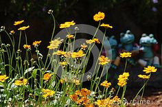 Garden scene with yellow orange coreopsis daisy like flowers in the forefront and trio of ornamental frogs in the background