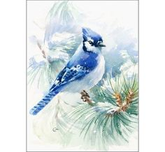 Blue Jay Original Watercolor Painting 8 x 11 by CMwatercolors