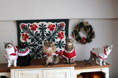 里親さんブログ今月の5猫集合写真は一昨年の^▽^; - http://iyaiya.jp/cat/archives/68527