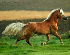 Equine Photography by Katarzyna Okrzesik