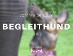 Vom Welpen zum Begleithund, Teil zwei. Erhalte Einblicke in unser Training für die Begleithundeprüfung mit Malinois Wollie von Hundesport Nubi!