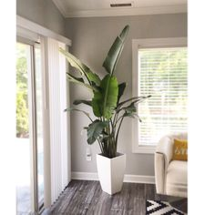Birds of paradise plant. Gives a tropical twist indoors.