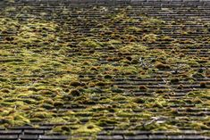 Picture of Rooftop Growth — Free Stock Photo