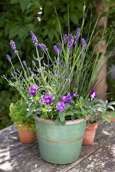 Pot of the month: July. Contains Lavandula angustifolia 'Hidcote', Carex nigra and purple & white pansies. Photo by Sarah Cuttle. For a similar, nectar-rich pot, visit http://www.gardenersworld.com/how-to/projects/wildlife-gardening/how-to-make-a-nectar-rich-container-display/203.html