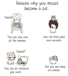 Reasons why you should become a cat