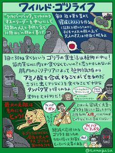 ジャングルに棲むグレート霊長類「ゴリラ」の図解です。この春はゴリラが勢いづいている気がしたので図解にしてみました。一口にゴリラといっても全部で4種類いるんですが、今回紹介しているのは動物園で見られるニシローランドゴリラです(マウンテンゴリラは動物園での飼育例がゼロ)。参考文献は『ゴリラ 第2版』など。 Animal Facts, Trivia, Biology, Mammals, Concept Art, Dog Cat, Character Design, Knowledge, Birds