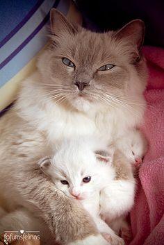 Mommy and baby. By fofurasfelinas