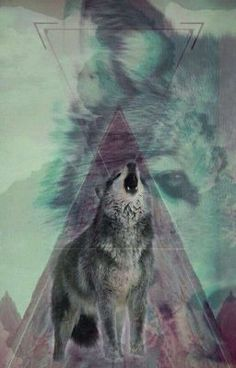 Made a wolf wallpaper for my iphone 6 fond d'écran loup, images loup Tumblr Iphone Wallpaper, Hipster Wallpaper, Wolf Wallpaper, Wallpaper Iphone Disney, Animal Wallpaper, Wallpaper Backgrounds, Wallpaper Ideas, Mobile Wallpaper, Dope Wallpapers