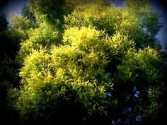Green and yellow 2013