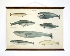 Whales  vintage educational chart illustration by ARMINHO on Etsy, $45.00