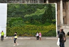 For the first time ever, a painting is being made into a 'living wall' outside the National Gallery. With over 8,000 living plants, General Electric (GE) has brought a masterpiece to life with a version of Van Gogh's famous painting A Wheatfield, with Cypresses as part of the Gallery's carbon plan. Over 8,000 plants have been planted on hoarding outside the National Gallery to recreate Van Gogh's A Wheatfield, with Cypresses.