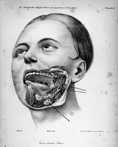 From Philippe-Frédéric Blandin's Treaty of Topographical Anatomy, 1834