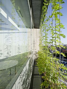 MM-arquitectura — Ampliación del Centro de Investigaciones Biomédicas #gevel