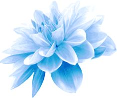 Blue flower by @Firkin, Derived from an image on publicdomainpictures.net, on @openclipart