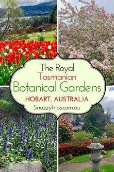 Spring into Springtime at Hobart's Royal Tasmanian Botanical Gardens to enjoy the season's colourful blooms. I recently did just that and spent a glorious half day wandering around this delightful gem, because who doesn't love gardens and flowers, right? Australia Travel Guide, Visit Australia, Travel Destinations, Travel Tips, Travel Ideas, Travel Packing, Solo Travel, Australia Destinations, Travel Articles