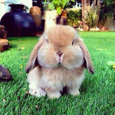 Look at those cheeks!! ^_^
