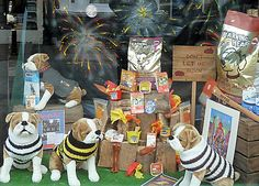 Lewes Bonfire Window Display Pet Shop | Flickr - Photo Sharing!