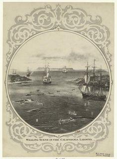 Whaling scene in the California lagoons. 1874