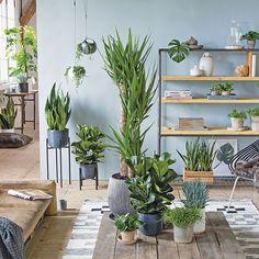 6 wertvolle tipps gegen winterblues wertvoll tipps und for Dekor von zierpflanzen