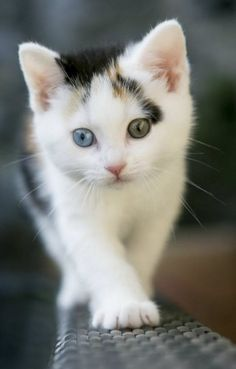 Look at the amazing eyes on this beautiful kitten…..