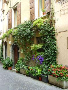 Michel's blog - Il giardino Italiano. Gespot in Luca: geveltuin! Bekijk meer tips op www.tuinen.nl