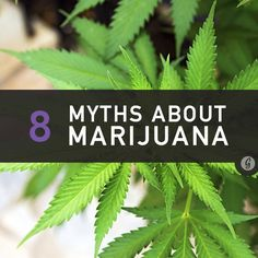What You Never Knew About Smoking Weed (Until Now)
