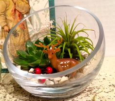 itty bitty terrarium of tillandsia and succulents...and a DOE!