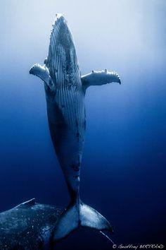 I wish so wish to be with the humpback whales, so elegant and awe inspiring
