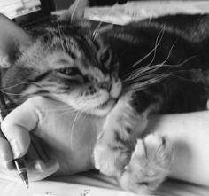 Kitty love hug. ❤️