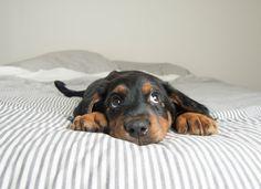 precious pup