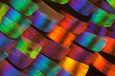 Details of the Madagascan Sunset Moth (Chrysiridia rhipheus)