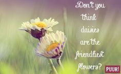 Don't you think daisies are the friendliest flowers?
