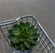 i want to buy a cactus (( mayb next time sigh ))