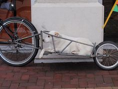 In this photo taken in Victoria, Canada, another type of trailer, similar to the Ibex model from B. Gear, is used to transport a larger dog. Buy Bike, Bike Run, Rando Velo, Biking With Dog, Dog Stroller, Specialized Bikes, Bicycle Maintenance, Cargo Bike, Cool Bike Accessories