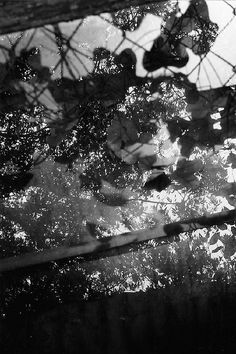 Reflected Sunlight Through Leaves