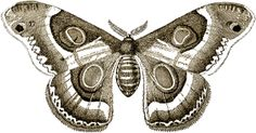 The definitive guide to moth symbolism across cultures, eras and texts. Discover the symbolic and spiritual meanings of moth encounters.