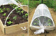 Garden Bugs, Garden Insects, Garden Animals, Veg Garden, Garden Pests, Diy Garden Bed, Garden Yard Ideas, Raised Garden Beds, Raised Bed