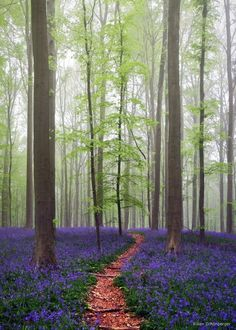 Stunning Blue Forest in Belgium
