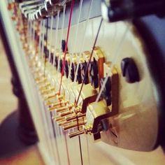 #Harp Photography