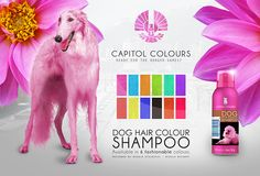 Capitol Advertisements - Dog Hair Colour Shampoo