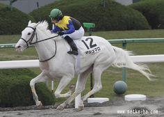 Marshmallow (Kurofune x Shirayukihime, Sunday Silence) 2009 filly Horse Fly, Horse Love, Horse Racing, Pretty Horses, Beautiful Horses, Horse Balloons, Polo Horse, Cowgirl And Horse, Horse Pattern