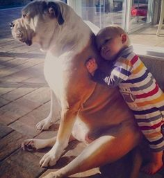 23 Heartwarming Photos Proving That Your Kids Need A Pet | World of Animals