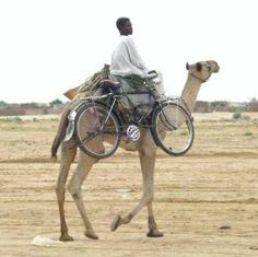 He might go a little faster if he rides the #bike, but I suspect the camel will take him further