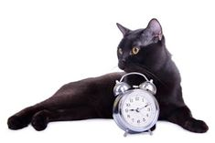Are you thinking your cats know what time it is? The sun, moon and their acute sense of smell are the next best thing to built-in watches. Creature Of Habit, When You Leave, Outdoor Cats, Cat Sleeping, Running Late, Howard County, Wisdom, Sun Moon, Black Cats