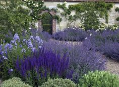 Love this effect: I could use sages, catmint, plumbago, and clipped myrtle and I would add a drift of iris :) Back Gardens, Outdoor Gardens, Mediterranean Garden Design, Garden Shrubs, Garden Beds, Garden Path, Purple Garden, Garden Borders, Garden Cottage