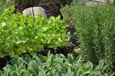 Herb Garden: Our Journey to a Natural Medicine Cabinet